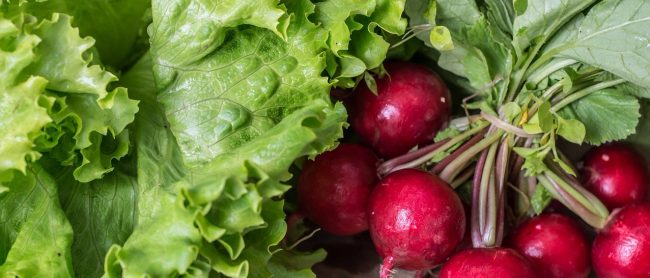 A picture of a garden fresh radishes and leaf lettuce